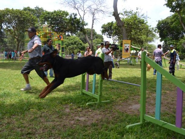 Parque para perritos en Jesús María