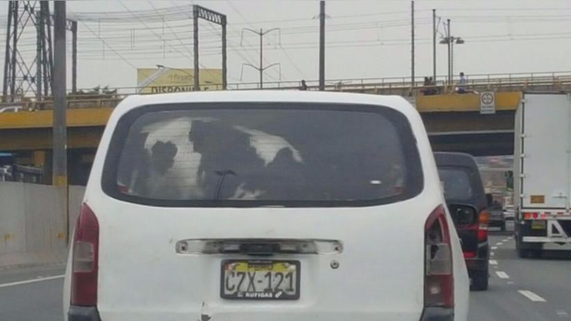 SJM: Trasladan vaca dentro de un auto en la Panamericana Sur