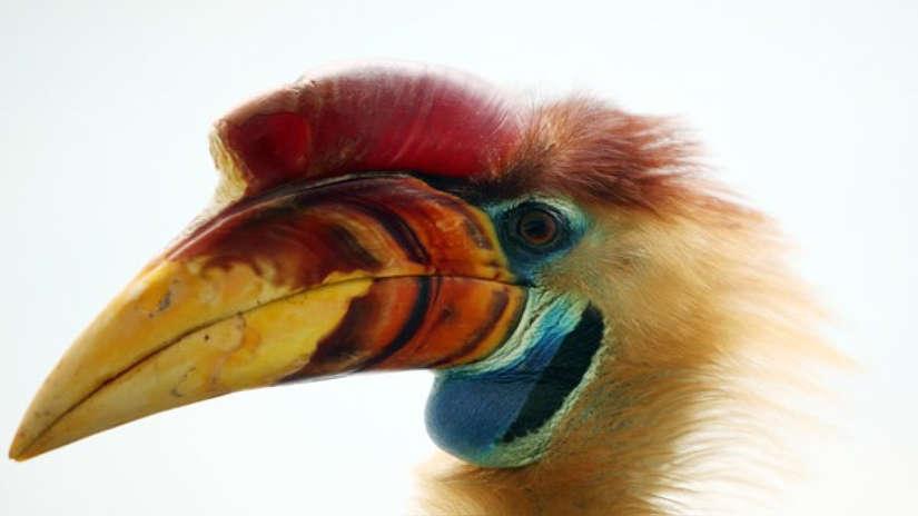 Fotos: los coloridos y únicos animales de la isla Célebes