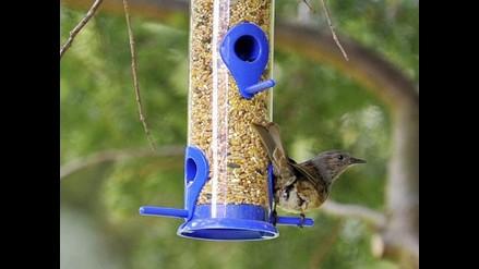 Aves prefieren el grano cultivado con pesticidas al biológico