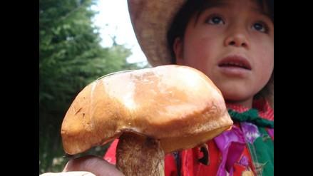 Pan, hamburguesas y pizza con harina de hongo comestible de Incahuasi