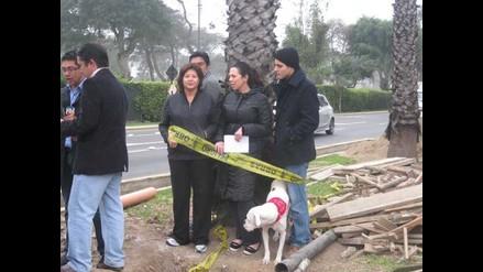 Vecinos se amarran a palmeras para impedir que sean taladas en San Isidro