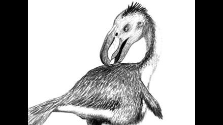 Temible ave depredadora vivió hace millones de años en Sudamérica