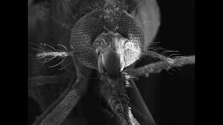 Encuentran compuesto químico con efecto prometedor contra la malaria