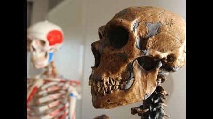 Evolución cerebral de Neardentales y Homo Sapiens es diferente tras nacer