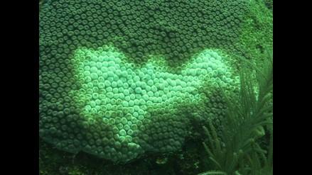 Corales pierden color por efecto invernadero