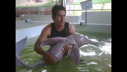 Loreto: Delfín rosado regresa a su hábitat en Iquitos