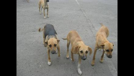 Loreto: 900 personas mordidas por perros y 1.200 por murciélagos