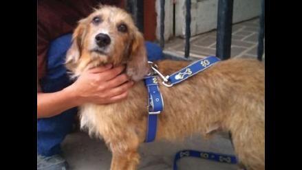 Los perros evalúan a los seres humanos, asegura estudio
