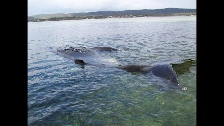 Hallan radiación en ballenas de Japón