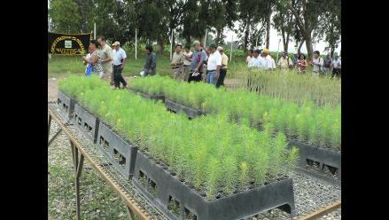 Siembran 384 plantaciones de tara en un minuto en colegio de Tumán