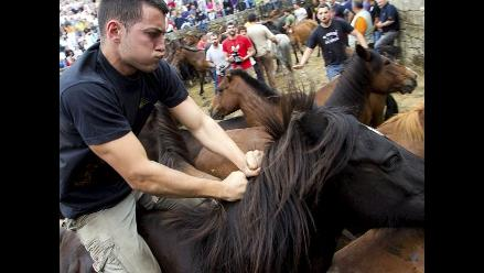 Aloitadores luchan contra caballos en celebración de Rapa das bestas