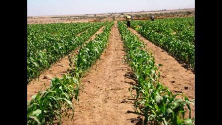 Cusco: Trabajadores del INIA rechazan entrega de fundo agrícola