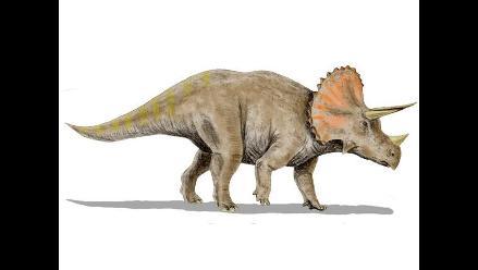 Descubren al último dinosaurio que vivió en la Tierra, aseguran