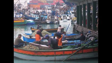 Chimbote: El 25% de pesca artesanal se destina a la harina