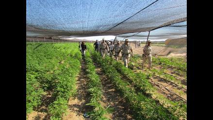 Ejército descubre el mayor plantío de marihuana en México