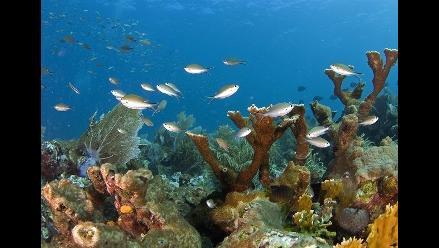 Redoblan esfuerzos para determinar origen de enfermedad del coral