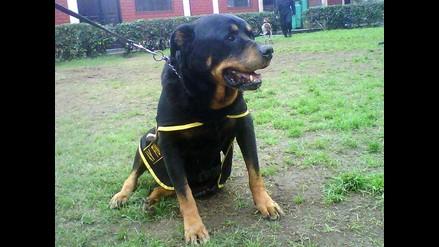 Lay Fun se retira del Escuadrón Canino de la Policía Nacional