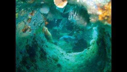 Misteriosa enfermedad afecta arrecife de coral en el Caribe