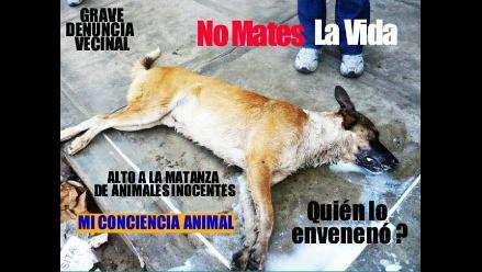 Realizarán vigilia contra envenenamiento de 15 perros en Cusco