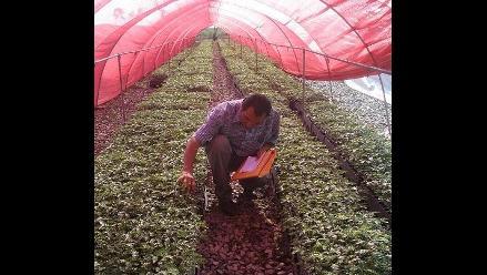 Moringa, aporte nutricional del desierto lambayecano