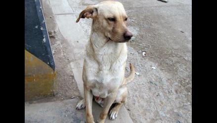 Busca a sus dueños perrito encontrado en la Avenida Colonial