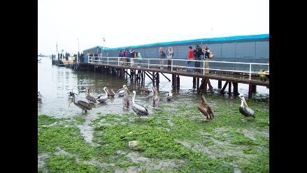 Oleajes en la costa central y sur del Perú afectan calles y viviendas