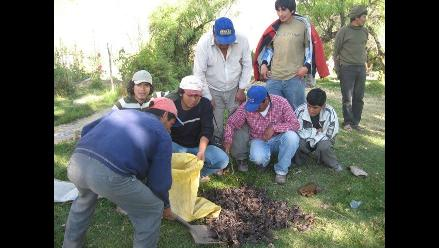 Detectan guarida de cientos de murciélagos en Bagua
