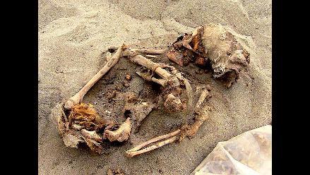 Hallan restos óseos de 12 personas de la Cultura Chimú en Huanchaquito
