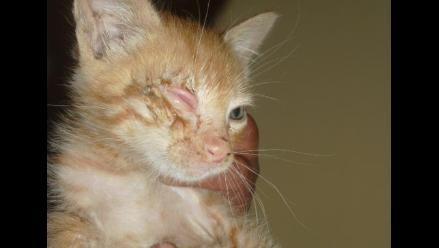 Gatito bebé a punto de perder el ojo