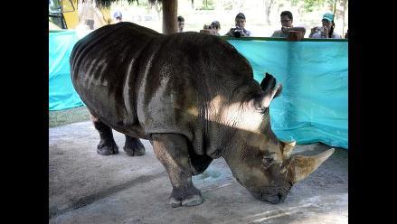 Trasladan rinoceronte a terreno que perteneció a narco Pablo Escobar