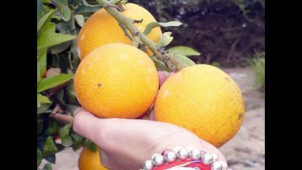 Digemid: La vitamina C no previene ni cura resfríos