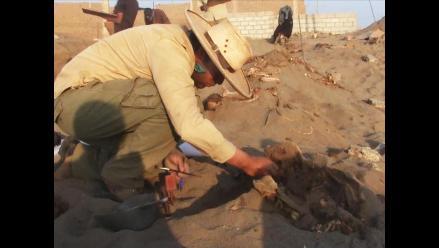 Hallan restos de 31 niños y 62 camélidos en Trujillo