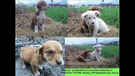Preciosas hermanitas en adopción! ¿Las adoptas?