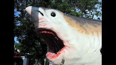 Tiburón prehistórico invade las calles de Florida