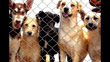 Se incrementan los casos de mordeduras de perros en Chimbote