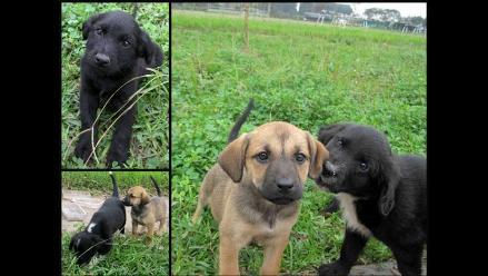 Cachorritas y su mamá en busca de casas