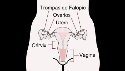 ambos ovarios duelen