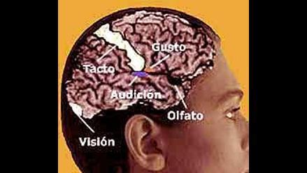¿En que consiste la Neurocata?