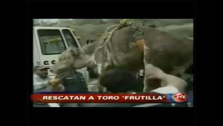 Rescate de toro acaparó atención de medios de prensa y redes chilenas