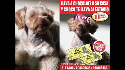 Ofrecen entradas para el Perú-Paraguay por hallar a mascota perdida