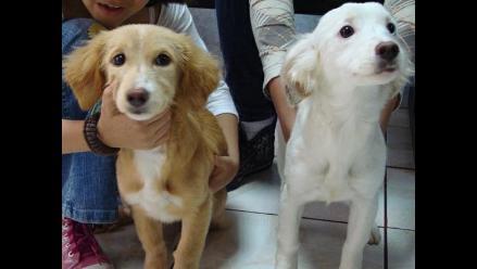Dulces cachorros en busca de casa
