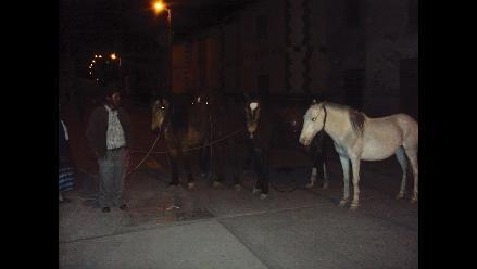 Cuatro caballos se salvaron de ser sacrificados en un camal