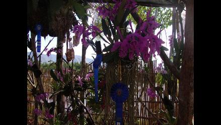 Con éxito culminó el XVI Festival de la Orquídea en Moyobamba