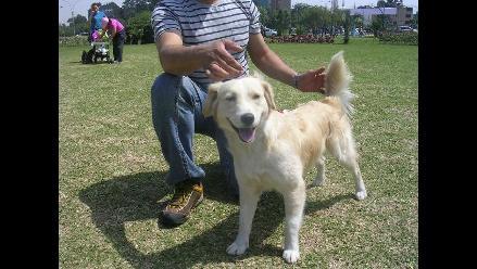 Lucas, lindo cachorro cruce con Golden sigue esperando por tí