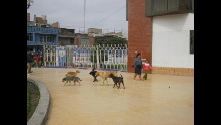 Más de 1 500 casos de mordedura de animales se registran en Lambayeque