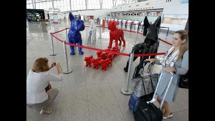 Animales gigante se adueñaron del aeropuerto de Montevideo
