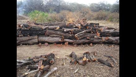 Lambayeque: Policía detiene a sujetos que talaban árboles en Chaparrí