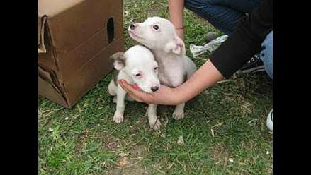 Cachorritos rescatados de un parque buscan hogares