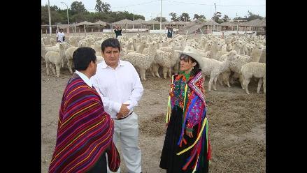 Implementarán talleres textiles con fibras de alpaca en Lambayeque